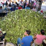 "Corn (""maíz elote"") being processed at the main wholesale market in El Salvador, La Tinedona. (Photo by Maria Moreira)"