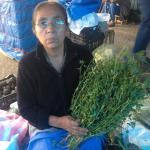 Figure 3. Woman selling chepil (C. pumila) at a market in Oaxaca Mexico in 2015. (Photo by Frank Mangan)