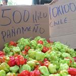 Chile Panameño for sale at a market in Siquerres Costa Rica. (Photo by Frank Mangan)