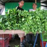 Figure 2. Cilantro (right) next to culantro (left) at a retail market in Costa Rica in 2004. (Photo by Frank Mangan)