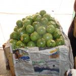 Figure 4. Calabacita bola at a wholesale market in Mexico City in 2010. (Photo by Frank Mangan)