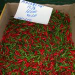 Smaller malagueta peppers, called malaguetinha, for sale at a market in Sao Paulo.