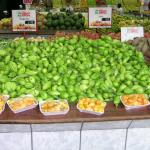 Figure 4. Jiló, comprido verde claro type, for sale at a market in Belo Horizonte, MG, Brazil in 2004 (Photo by Frank Mangan)