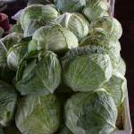 Figure 6. Cabbage for sale at a wholesale market in Fortaleza Brazil in 2004 Photo by Frank Mangan)