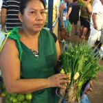 Figure 13. Woman selling the ingredients for cheiro verde at a market in Manaus Brazil in 2015. (Photo by Frank Mangan)
