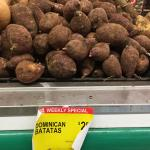 "Figure 2. White fleshed sweet potato, called ""Dominican Batatas"" (""Batatas"" meaning potato English) at a Latino market in Holyoke, Mass. In 2015. (Photo by Frank Mangan)"