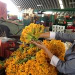Figure 6. Flowers of calabaza for sale at a wholesale market in Mexico City in 2012. (Photo by Frank Mangan)