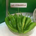 Figure 1. Cubanelle peppers, called ají cubanela, at a trade show in Santo Domingo Dominican Republic in 2015. (Photo by Frank Mangan)