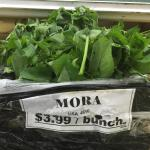 Figure 2. Bunched hierba mora for sale at a Latino market in Washington DC in 2016 Photo by Frank Mangan)