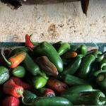 Figure 3. Jalapeño peppers for sale at a retail market in Progreso in the state of Yucatan in Mexico in 2017 Photo by Frank Mangan)