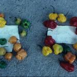 Figure 9. Two types of Capsicum chinense peppers found in a market in Barquisimeto Venezuela in 1998. (Photo by Frank Mangan)