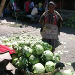 Figure 3. Cabbage for sale a wholesale market, La Tiendona, in El Salvador in 2008. (Photo by Frank Mangan)