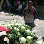 Figure 3. Cabbage for sale a wholesale market, La Tiendona, in El Salvador in 2008. (Photo by Frank Mangan)