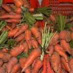Carrots for sale in a market in Honduras. (Photo by Frank Mangan)