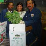 Figure 27. Chipilín packed in a bushel 1/9  box at a market in Long Island New York in 2009. (Photo by Frank Mangan)