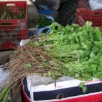 Figure ?? Cilantro, with roots intact, for sale at a market in Costa Rica in 2004 Photo by Frank Mangan)