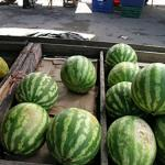 Whole watermelon for sale at a market in Siquirres Costa Rica. (Photo by Frank Mangan)