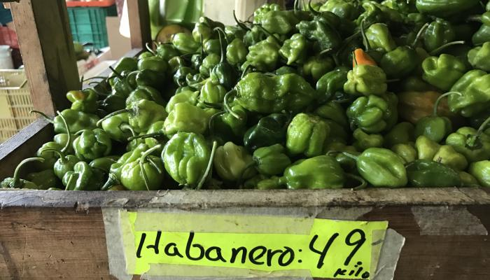 Habanero peppers for sale at a market in Progreso in the state of Merida Mexico in2017. (Photo by Frank Mangan)