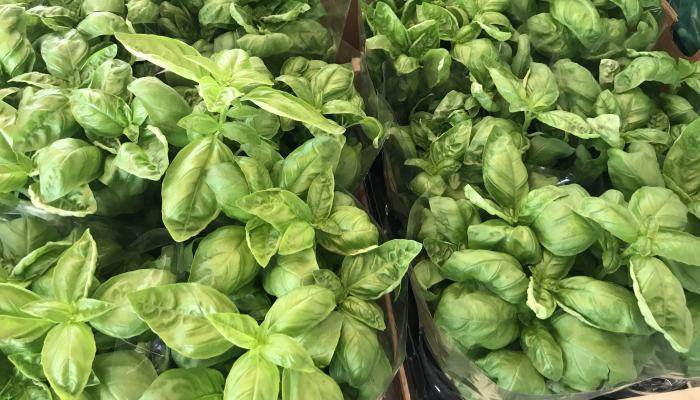 Basil for sale in at a market in Siena Italy in 2017 (Photo by Frank Mangan)