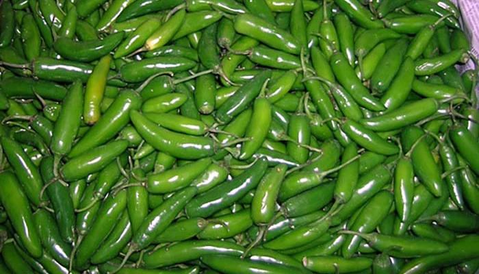 Serrano peppers at a wholesale Mexican company in Queens New York on August 22, 08.