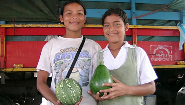 Ayote tierno at a market in Siquirres Costa Rica. The fruit on the left is mature while the fruit on the right is immature. (Photo by Frank Mangan)