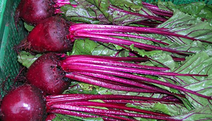 Beets harvested at a farm in Costa Rica. (Photo by Frank Mangan)
