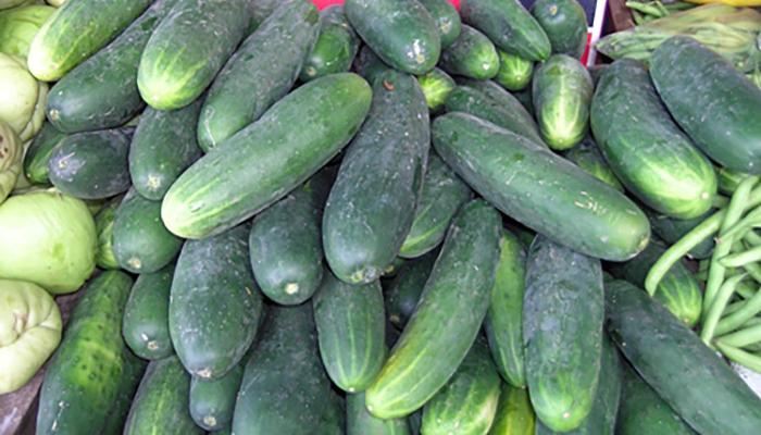 Cucumber for sale at a market in Siquirres Costa Rica. (Photo by Frank Mangan)