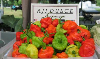 Ají dulce grown in Massachusetts for sale at a farmers' market in New Bedford, Mass. in 2009 (Photo by Maria Moreira)